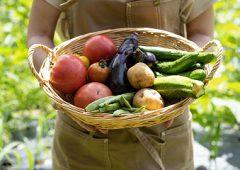 10月「健康ピクルス」収穫情報