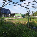 6月野島農園