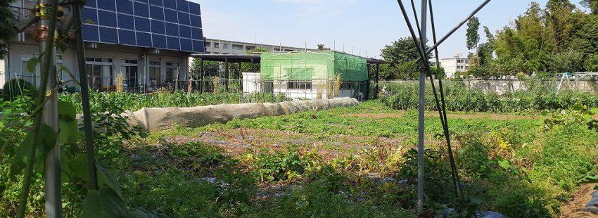 健康ピクルス ~6月の収穫野菜~ 効能紹介2