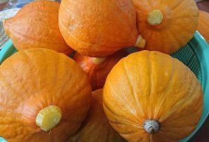 サラダかぼちゃ、コリンキー、有機野菜、野島農園、ピクルスの食材