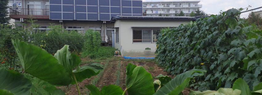 健康ピクルス ~8月の収穫野菜~ 効能紹介1